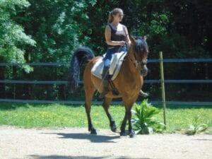 enseignement equitation