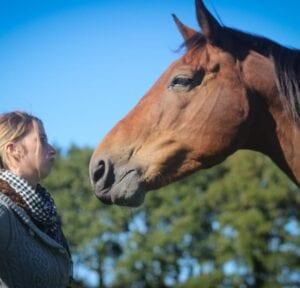 La cohérence dans notre rapport au cheval