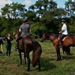 enseignement équitation stage
