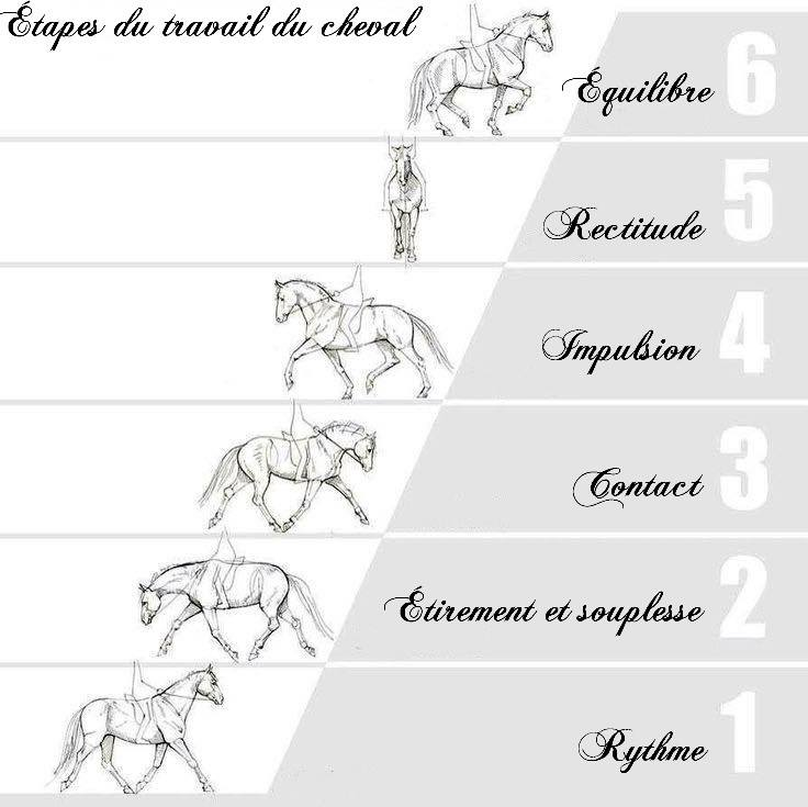échelle de progression