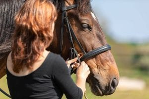Journée bitfitting et bridle fitting @ Domaine Equin d'Agora | Plouescat | France